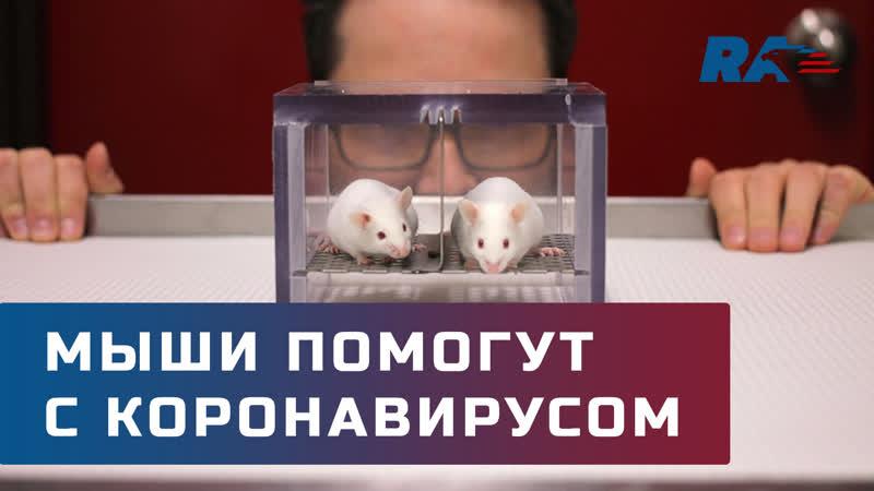 В России создадут генно-модифицированных мышей для борьбы с коронавирусом