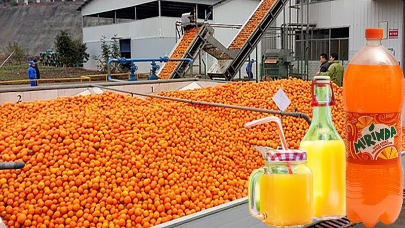 See How Fruit Juice is Produced in The Factory - Advance Food Manufacturing Machines Automatic