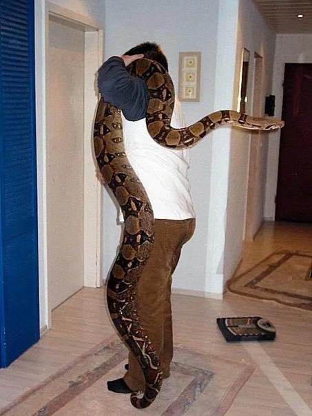Люди которые завели питона, но не рассчитали его размеры. Очень многим людям нравятся змеи и питоны, а может даже анаконды, ведь они такие красивые и большие. А насколько большие Хозяева,