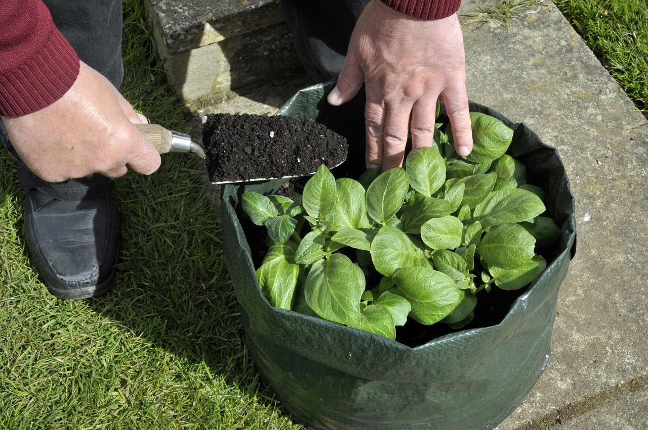 Что такое сумка для выращивания?