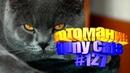 Смешные коты Приколы с котами Видео про котов Котомания 127