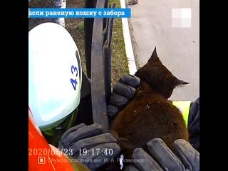Спасатели сняли раненую кошку с забора в Архангельске