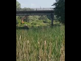 В реку с вышки прыгают в Боровом