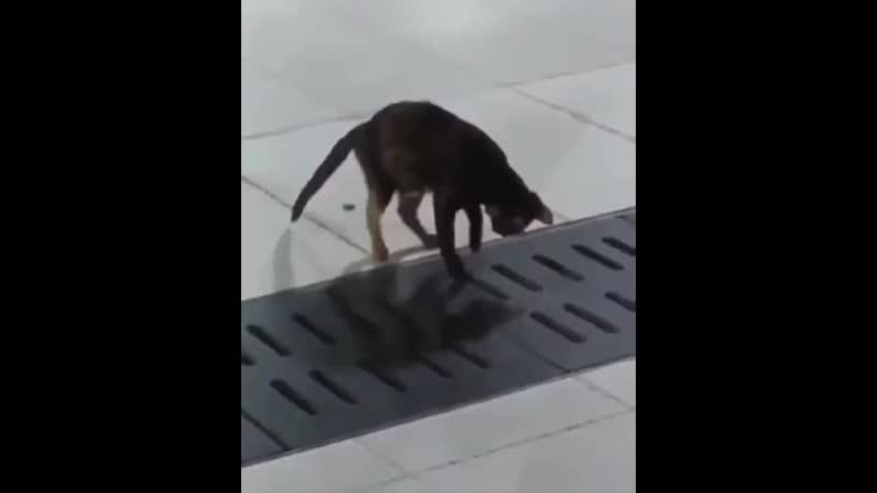 Есть работа такая - мышей ловить 🐈