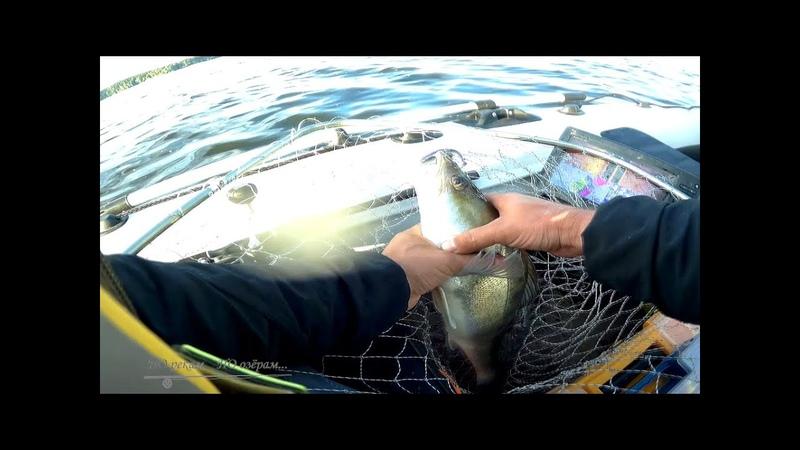 За судаком на озерну Рыбалка на Озернинском вдх Реванш