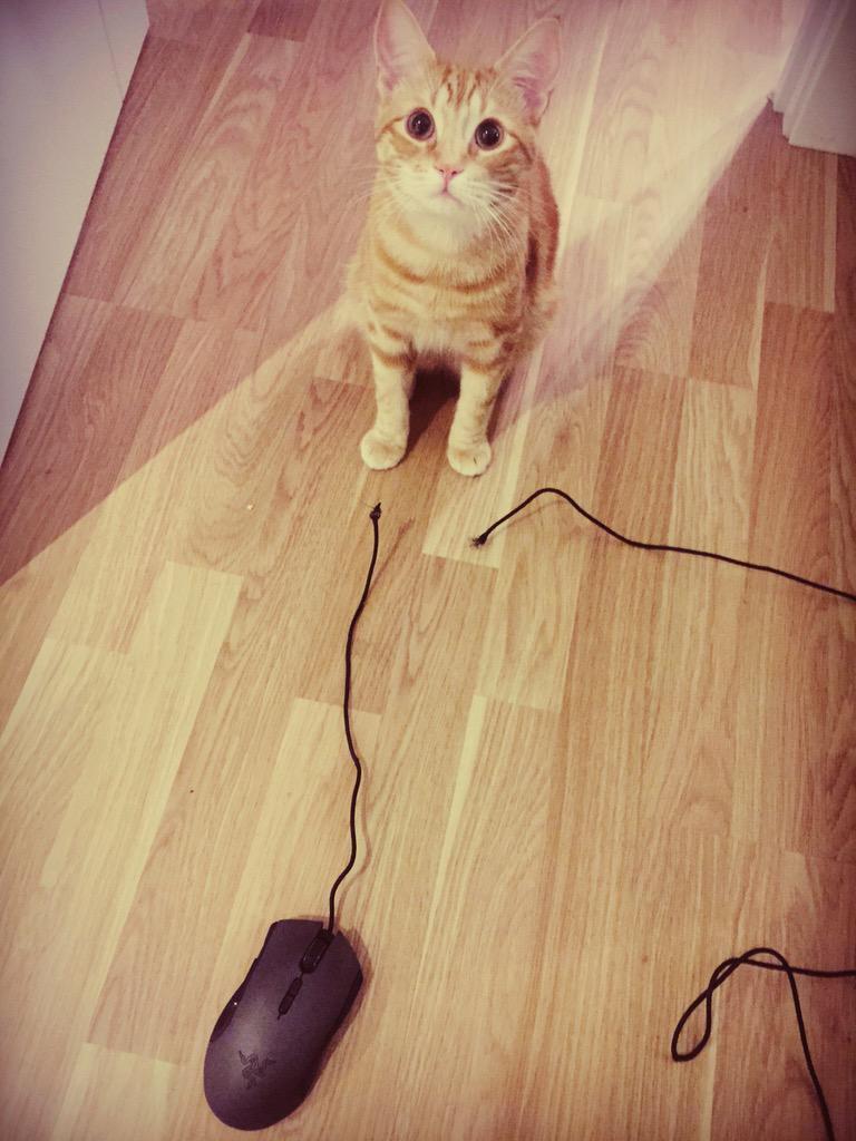 Я поймал мышь)