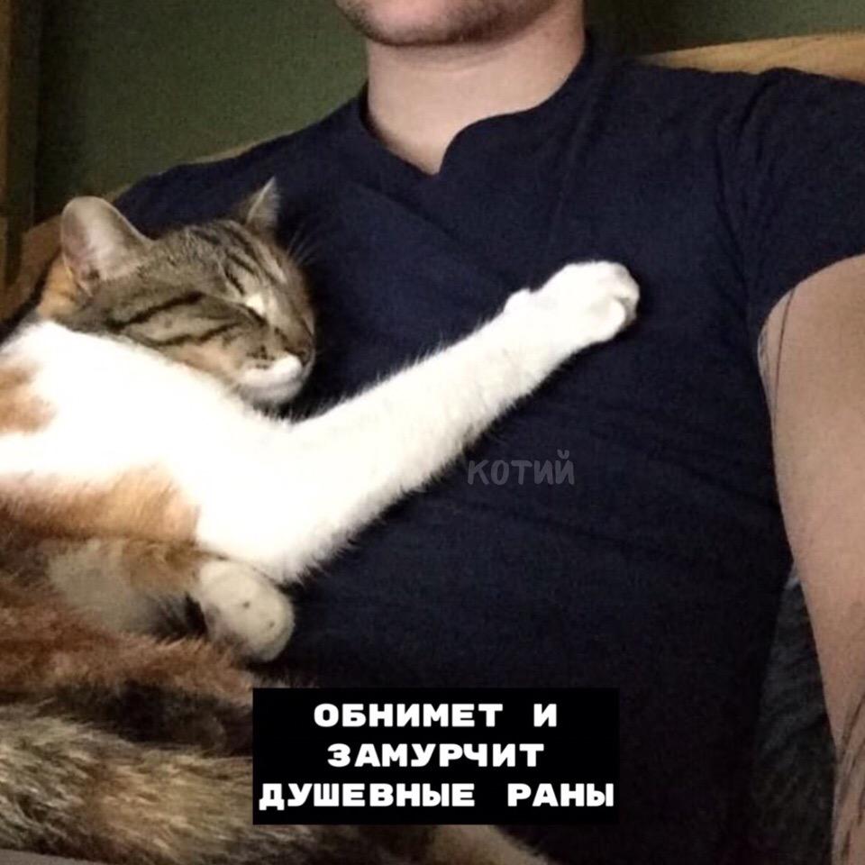 8 плюсов, когда у тебя есть кот