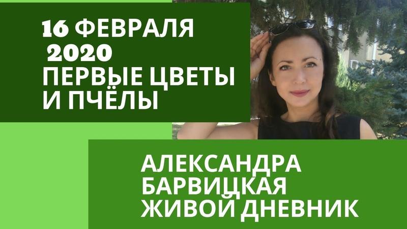 ЗИМЫ В ЭТОМ ГОДУ НЕ БЫЛО Живой Дневник 16 февраля 2020 Александра Барвицкая