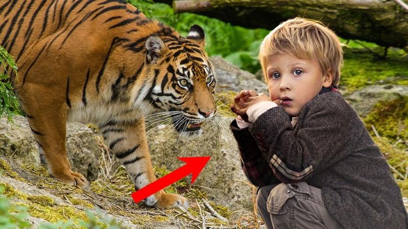 Тигрица ВЫВЕЛА из леса заблудившегося ТРЕХЛЕТНЕГО МАЛЬЧИКА, а спустя несколько лет....