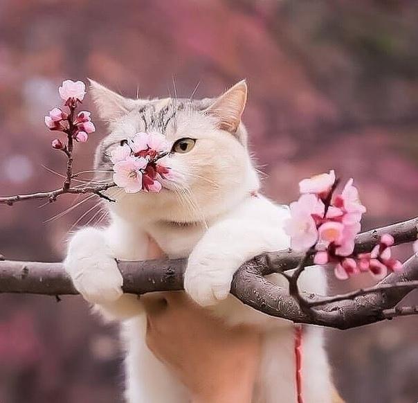 Ну и запах! Весна, любовь, и  тепло!