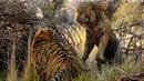 Самые жуткие схватки животных в диком мире