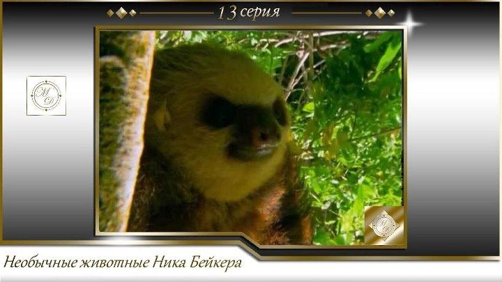 Необычные животные Ника Бейкера 13 серия Карликовй ленивец Weird Creatures with Nick Baker 1х13 Pygmy sloth
