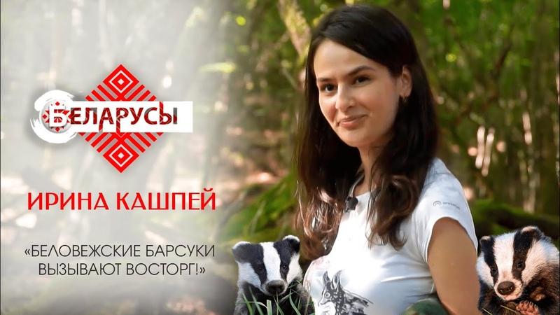 Беловежские барсуки восторг Эколог о Национальном парке и его обитателях
