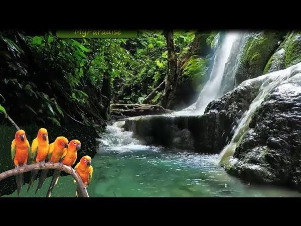 Relajante Sonido de Naturaleza Meditar Estudiar Dormir Antiestres Sonido de Agua y Pajaros