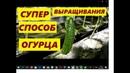 СУПЕР СПОСОБ ВЫРАЩИВАНИЯ ОГУРЦОВ В 5 ЛИТРОВЫХ ВЕДРАХ!