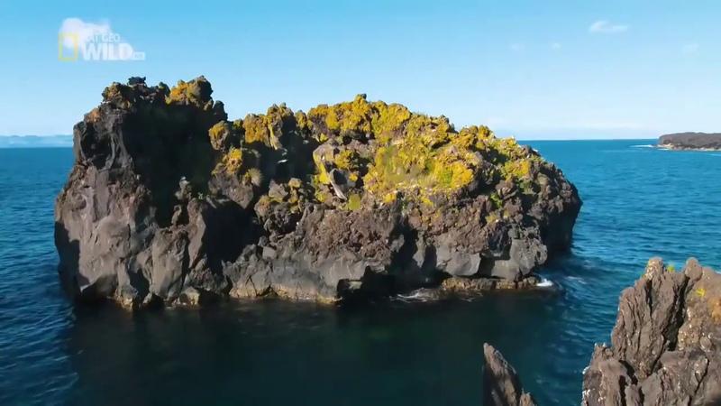 Дикая природа Португалии документальный фильм BBC NAT GEO WILD
