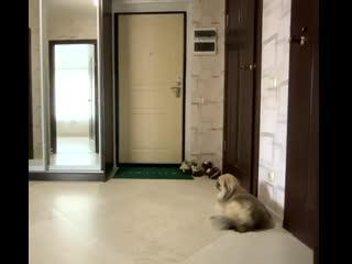 Что делает собака, когда вы уходите из дома NR