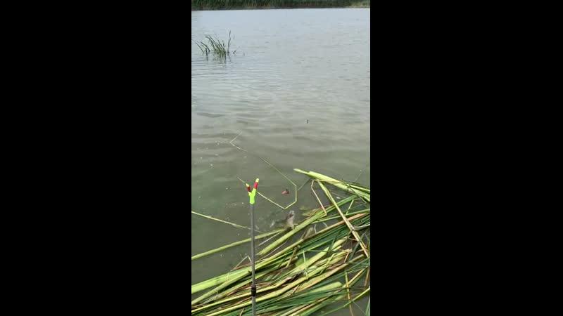 Гости из Подмосковья на рыбалке
