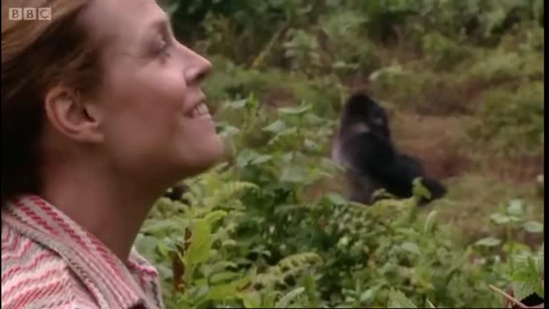 Сигурни Уивер приехала навестить горилл а Африку на место съёмок Горилл в тумане 2006 BBC