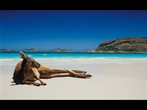 Бойцовский клуб для животных 3 серия Потасовка на пляже