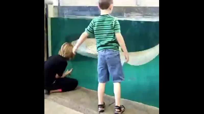 Дети и водные обитатели l Lucky Craft