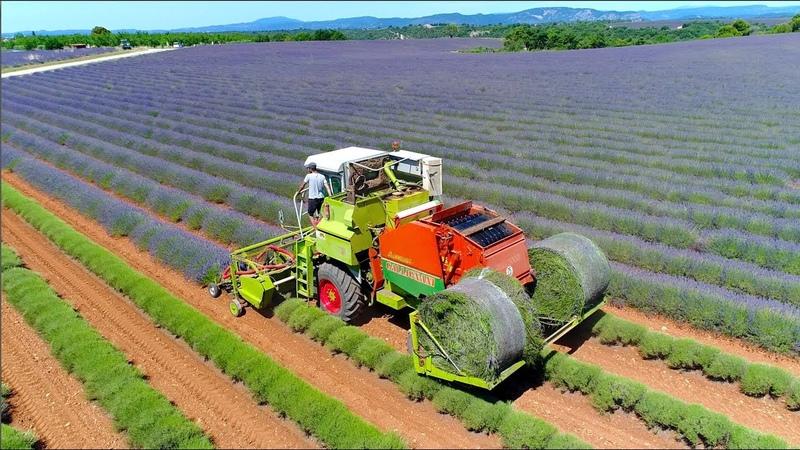 Lavender harvest in round bales Valensole France Unique self propelled harvester