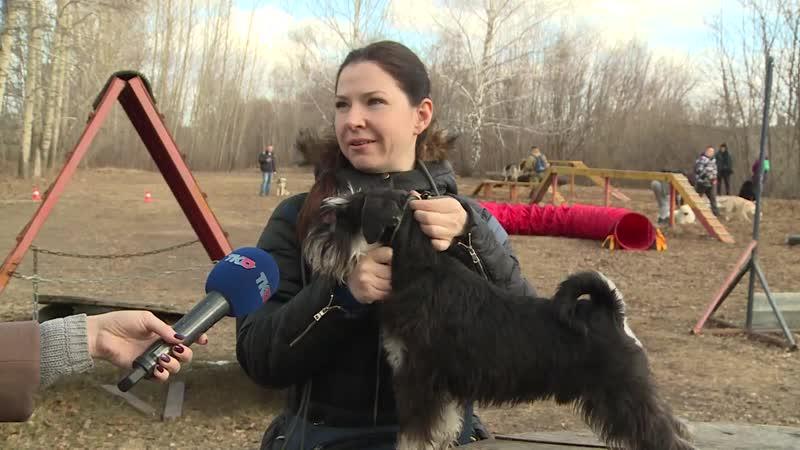 Владельцам собак рассказали, как защитить питомца от клещей