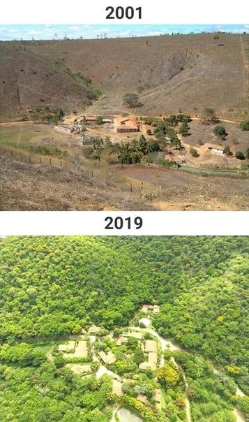 Супруги Салгаду с единомышленниками восстановили более 600 гектаров леса, высадив более 2,5 миллионов деревьев