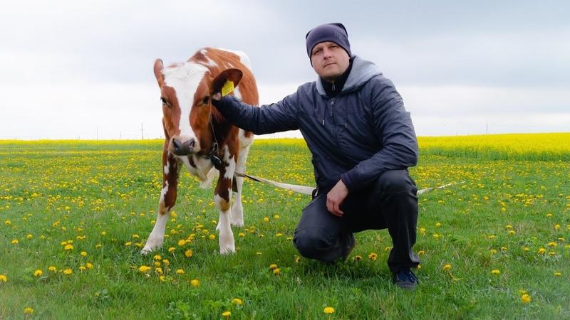 Это наша корова Следуем совету президента Лечимся полем и лепешками