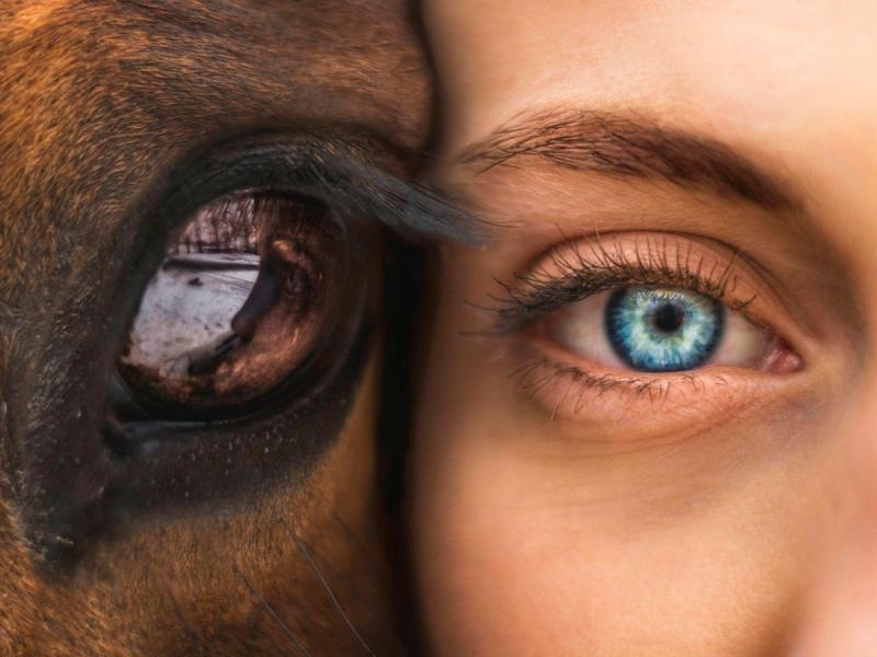 У животных есть душа. Я видел это в их глазах.Жизнь Пи