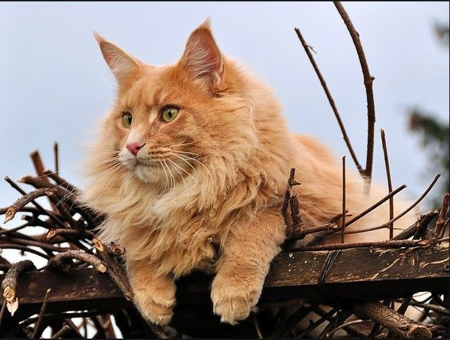 Ох, какие котеи! Красавцы!!!