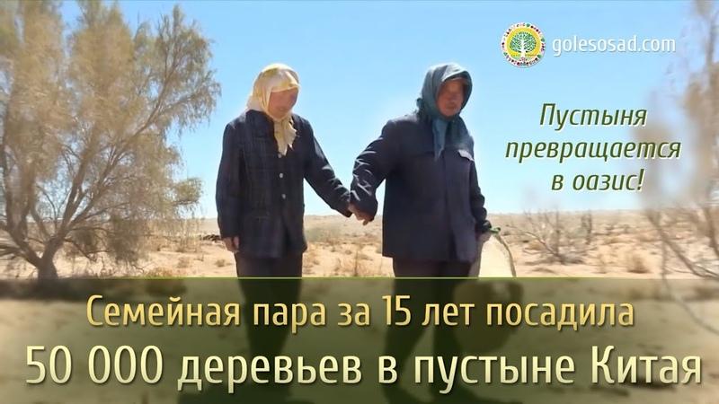 ПУСТЫНЯ ПРЕВРАЩАЕТСЯ В ОАЗИС!
