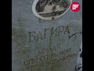 Кладбище домашних животных - где хоронят собак и кошек в Казани