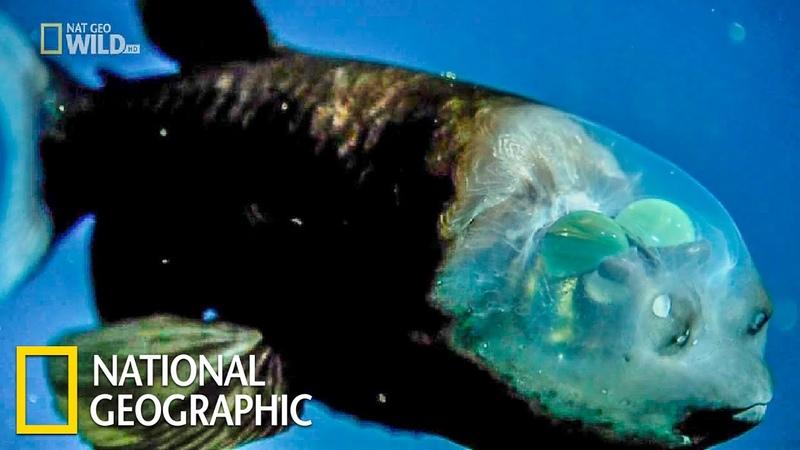Самые странные в мире Необычные части тела National Geographic