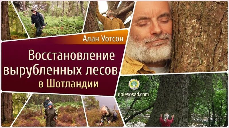 Алан Уотсон Федерстоун Восстановление Лесов Шотландии