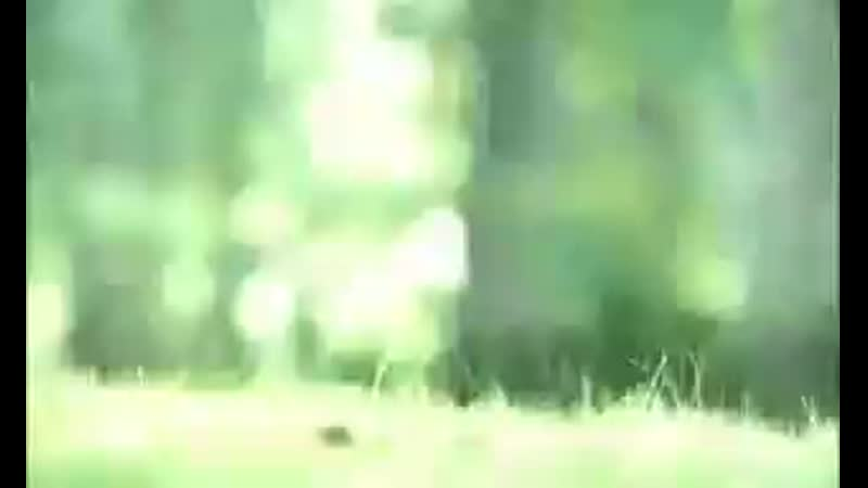 Готэм Пингвин клип
