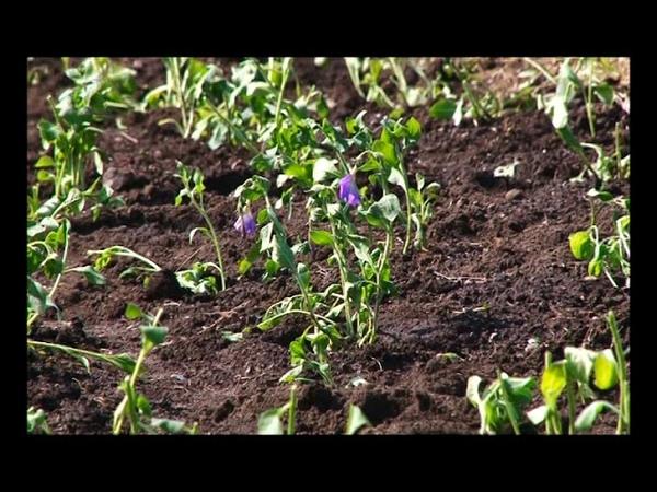 КБО Саяногорска приступило к высадке цветов