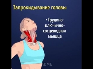 Наглядный пример того, какие мышцы вы растягиваете!