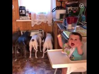 Как папа с сыном кормили собак