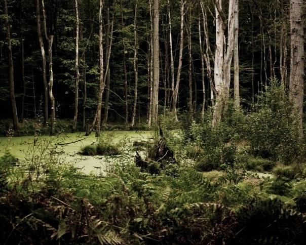 Поход за черникой Сколько себя помню, я никогда не сомневалась в том, что сверхъестественному есть место в нашей жизни. Это было для меня само собой разумеющимся фактом и каких-либо