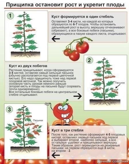 Зачем прищипывают томаты