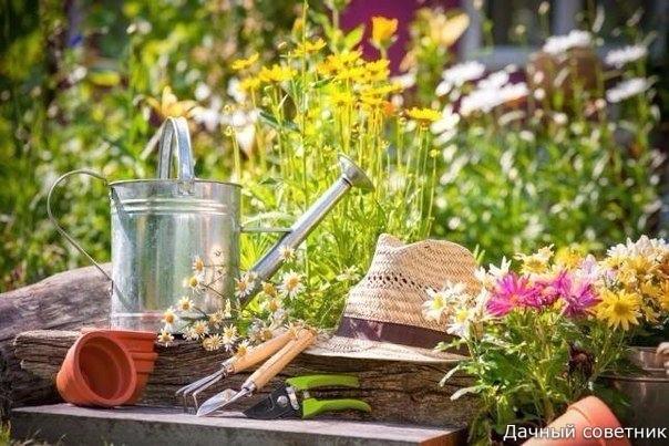ТОП-10 средств для защиты растений!!!