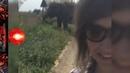 Тревожная кнопка №80 Гаражный кооператив в Молодечно двое погибли Под Кобрином слона ловили