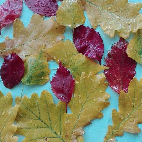 Осеннее творчество с детьми А мы осень законсервировали! Надоело сушить листья в толстенной энциклопедии вот их воском и залили! Посмотрите какая красота получилась, листья как-будто