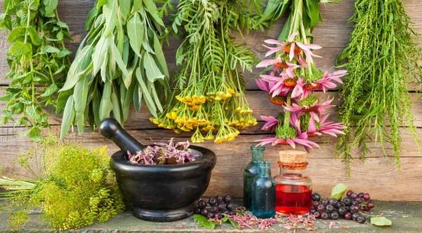 5 самых полезных трав летом: от жары, духоты и нехватки кислорода Облепиха спасет сосуды, а мелисса - мозг. Также лекарственные растения помогут справиться со слабостью, кашлем и облегчат