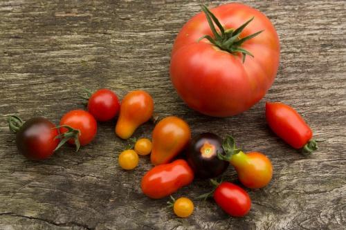 Тепличные помидоры: секреты ухода и урожайности. Наличие теплицы позволяет дачнику выращивать капризные культуры. Однако без некоторых особенностей ухода отменный урожай не собрать. Мы