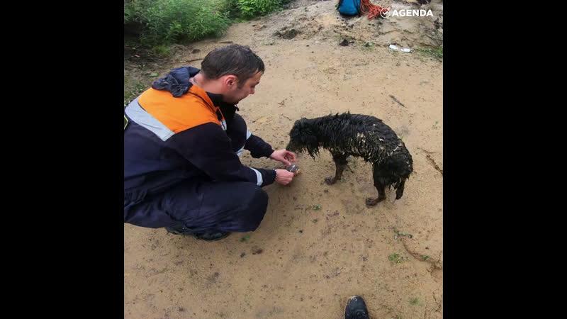 Собаке спасли жизнь