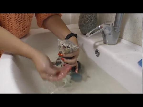 Первая ванна для спасения уличных котят