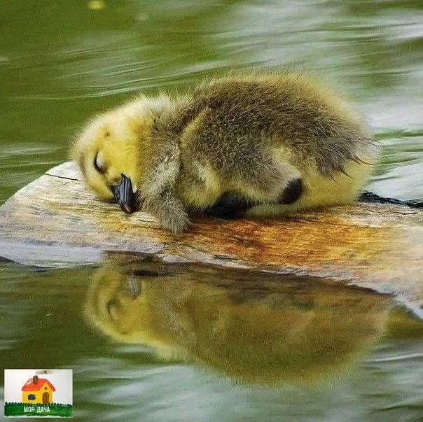 Как сладко спит ..