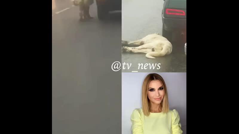 Ольга Орлова спасла собаку привязанную к движущейся машине